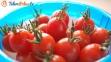 Pomidory koktajlowe
